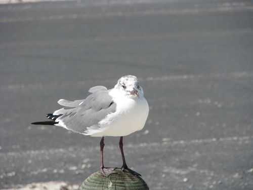 What's a trip to the coast without an obligatory sea gull picture?