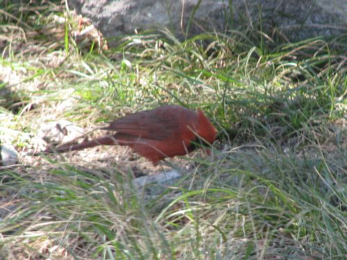 We saw a cardinal, which always means good luck.